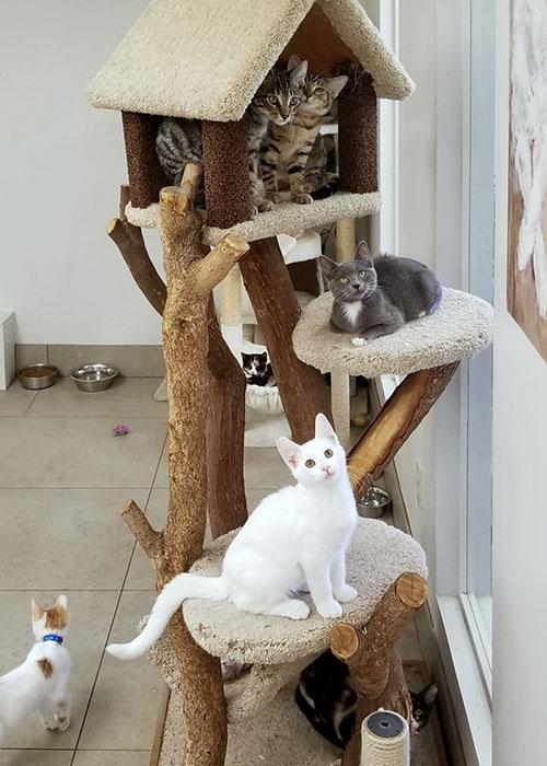 Homeward Bound Cats Adoption Center Volunteering